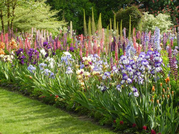 Companion Planting with Irises: Alliums, Peonies, Icelandic and Oriental Poppies, Delphiniums and, of course, the ubiquitous Lupine