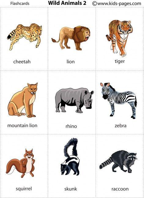 Cheetah, Lion, Tiger, Mountain Lion, Rhino, Zebra, Squirrel, Skunk, Raccoon