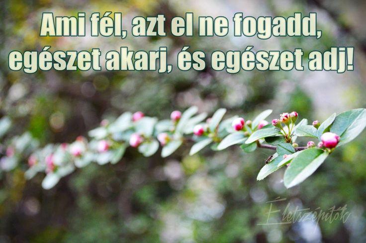 www.eletszepitok.hu