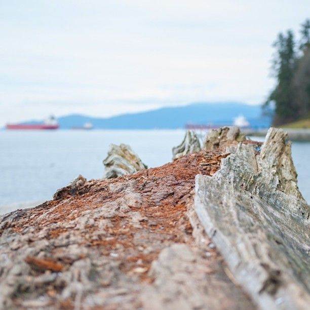 Dead wood by the sea at Stanley Park #nature #Vancouver #vancity #closeup