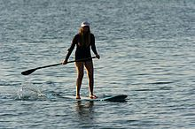Three major subdivisions within stand-up surfing are longboarding, shortboarding, and stand up paddle surfing