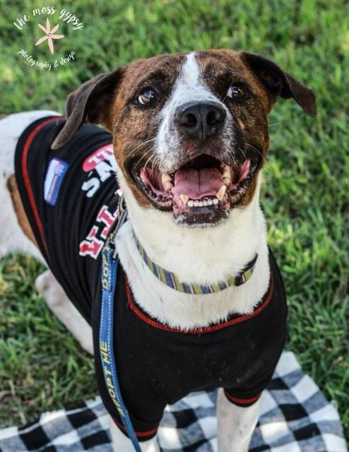 Adoptable Dogs In Your Local Shelter Dogs Adoption Pet Adoption