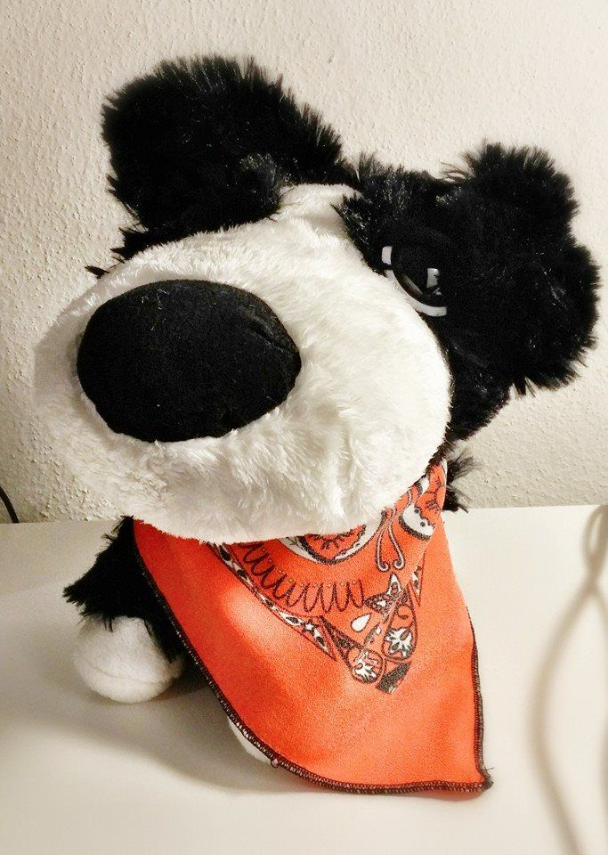 @frisbeescape have a new #mascotte , we present to you a little #Marcellino ! #dogs #bandanas #forall #foryou #cool