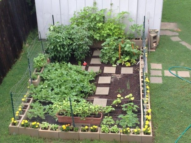 This beginner is off to a great start with her cinder block garden --> http://www.hgtvgardens.com/ask-and-share/maintenance-discussions/i-am-a-beginner-and-started-a-cinder-block-garden-im-at-2-month-mark-any-suggestions-0000013e-dd47-d409-a93e-dfe763670000?soc=pinterest