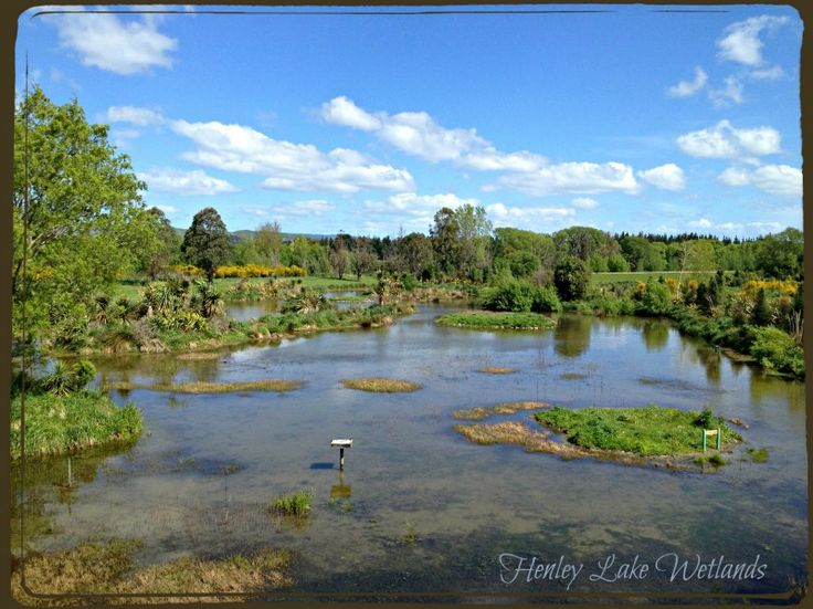 Henley Lake Wetlands, Masterton, New Zealand - one of our fave spots for birdwatching.