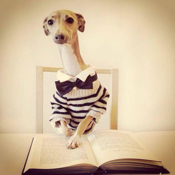 36 besten animals are awesome bilder auf pinterest animal kingdom einfach und greyhound kunst. Black Bedroom Furniture Sets. Home Design Ideas