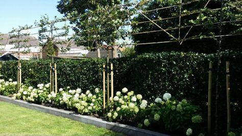 Leilindes in verhoogde strakke border met hortensia's (annebelle) in moderne strakke tuin