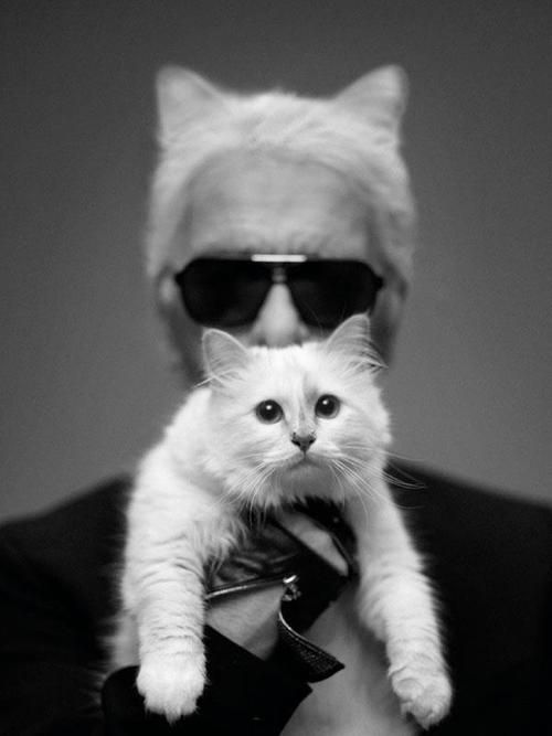 Karl Lagerfeld opens first London store, meet his adorable spoiled princess Choupette - 3am & Mirror Online #fashion