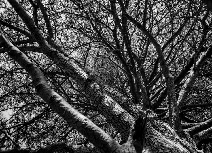 Blind Veterans UK Photography Week, spring 2014, Brighton. Captured by Blind veterans UK member Keith Harness, this black and white image looking up at the sky through a tree in Stanmer park, Lewes was captured during the groups second field trip of the week. #Brighton #Photography