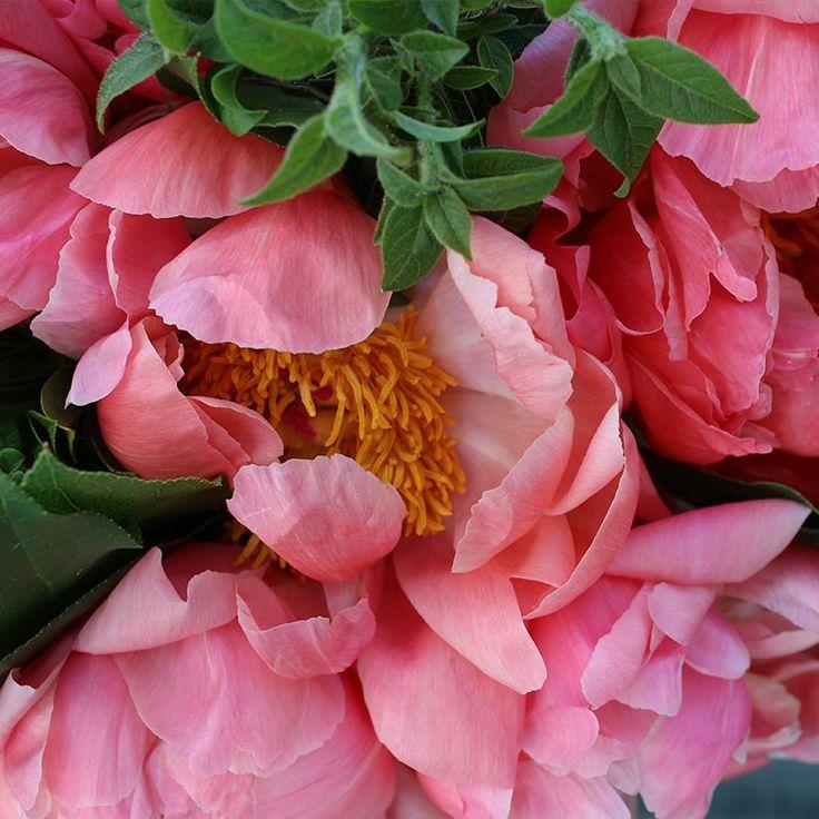 Ramo de Peonías Coral Charm | Floristería Bourguignon #peony #bouquet