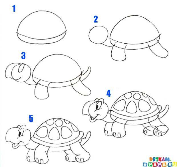 animales dibujar facil step | Cómo dibujar una tortuga?