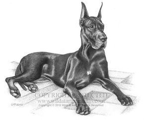"""Gibbs,"" Black Great Dane graphite pencil drawing on 11"" x 14"" acid-free paper."