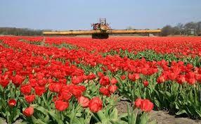 Tuinbouw is het verbouwen van groente, bloemen, fruit. De gewassen hebben veel verzorging nodig.