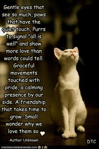 Kitty ~ I Love this poem