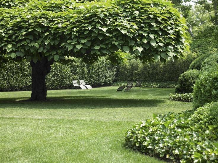 Under the catalpa tree