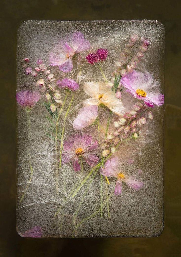 Beautiful Pictures of Frozen Flowers – Fubiz Media