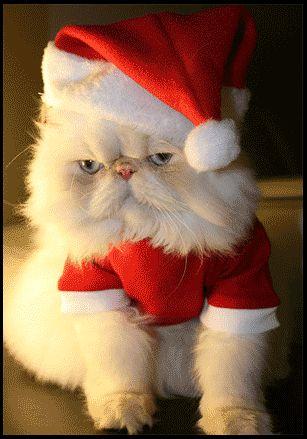 Lustige und Süße Katzen Videos: Weihnachten lustige Katzen Bilder
