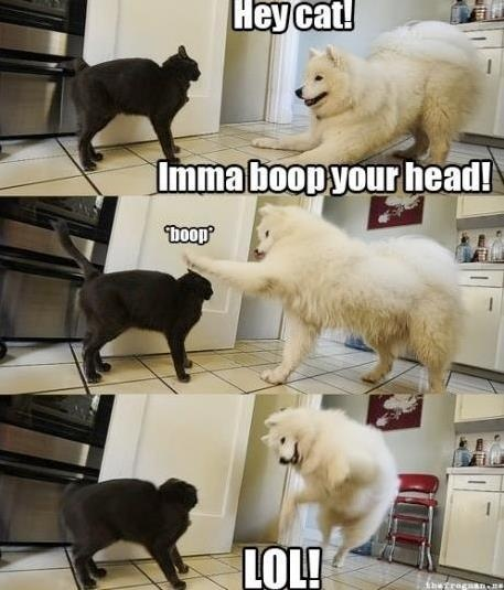 Boop!  I hope to someday catch something this hilarious on film.: Make Me Laughing, Dogs And Cat, Hey Cat, Silly Dogs, Dogs Cat, Funny Stuff, Funny Animal, Imma Boop, So Funny