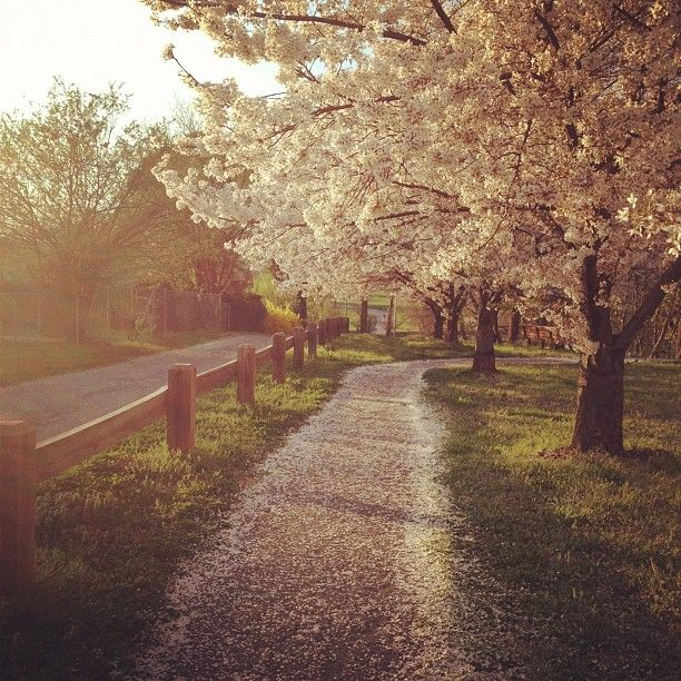 I LOVE the spring feel of this picture!
