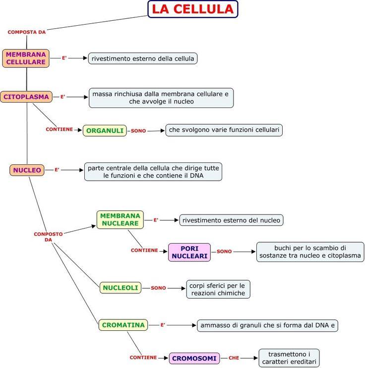 lapbook classificazione piante - Cerca con Google