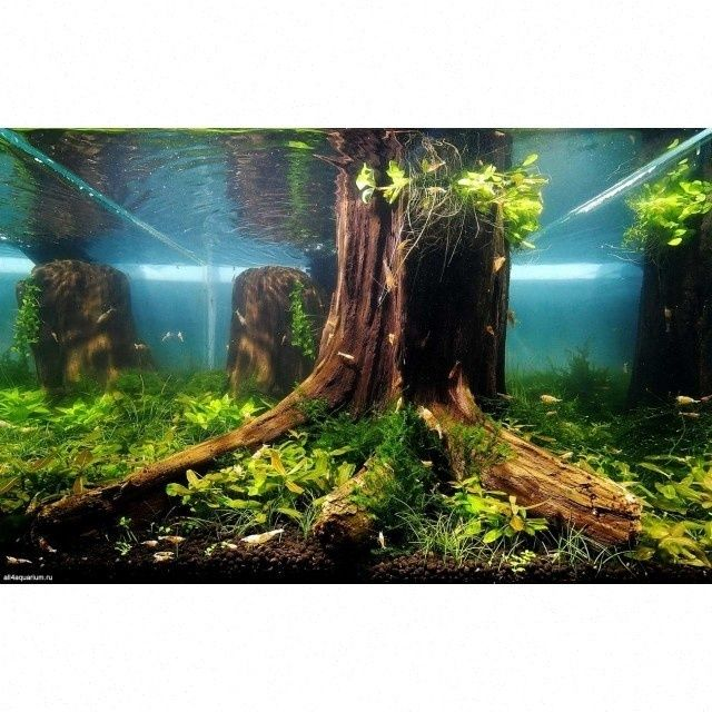 10 Best Ideas About Aquascaping On Pinterest