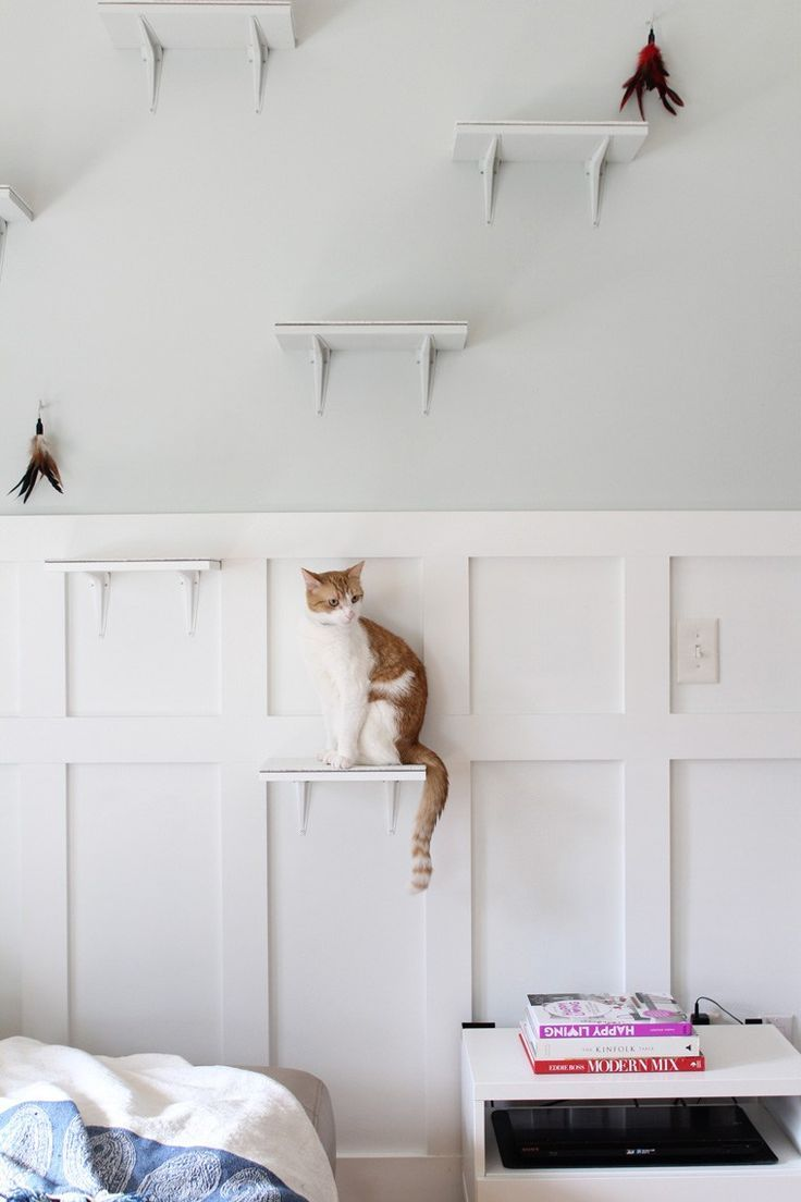 Building The Perfect Diy Pet Oasis For Our Cats Cat Steps Indoor Pets Cat Room