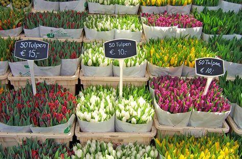 Visiting Amsterdam on a budget-Tulips in the Bloemenmarkt flower market
