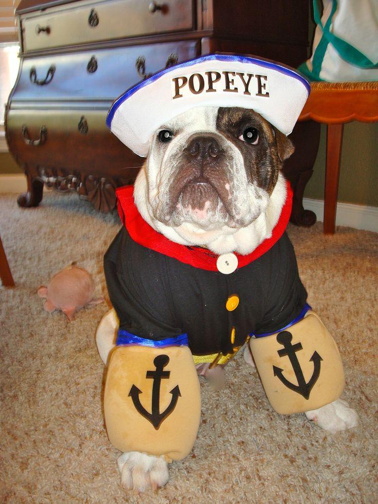 DIY dog halloween costume!