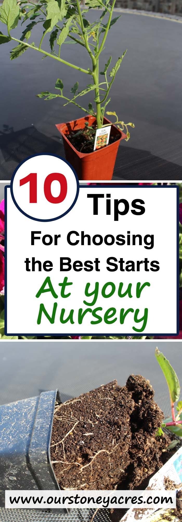Choosing the best plant starts at your local nursery is important to get your garden off to it's best start this year!
