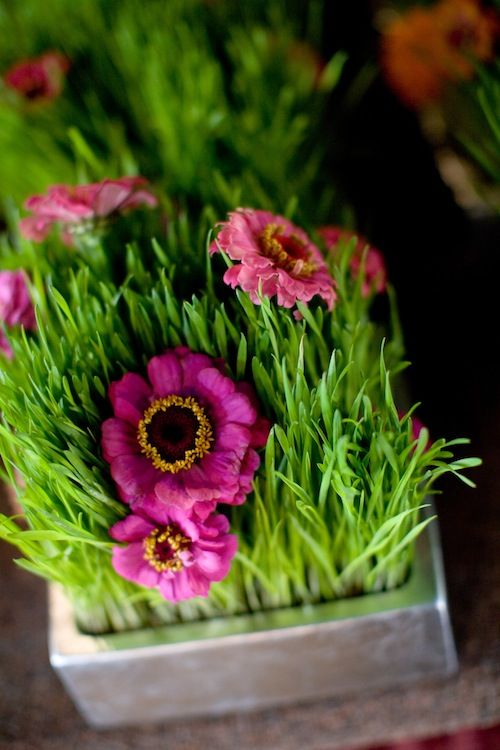 Best images about wheat grass trendspotting on