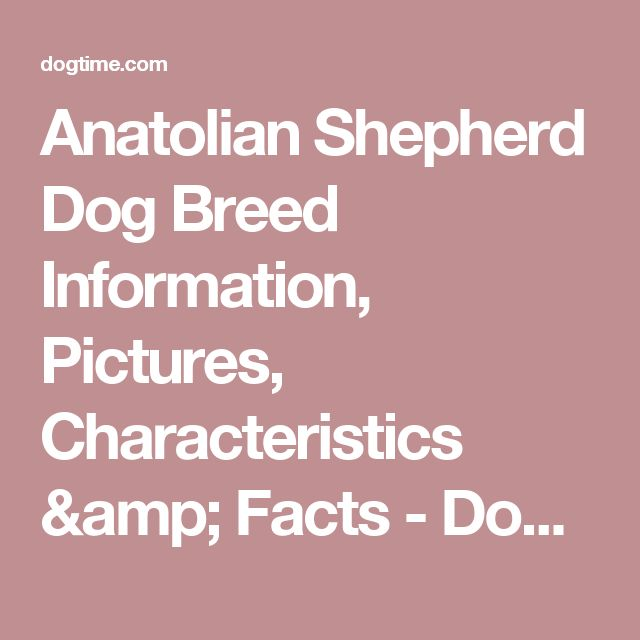 Anatolian Shepherd Dog Breed Information, Pictures, Characteristics & Facts - Dogtime