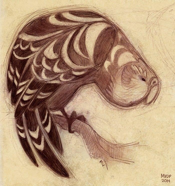 Kakapo Sketch by sketchinthoughts.deviantart.com on @deviantART