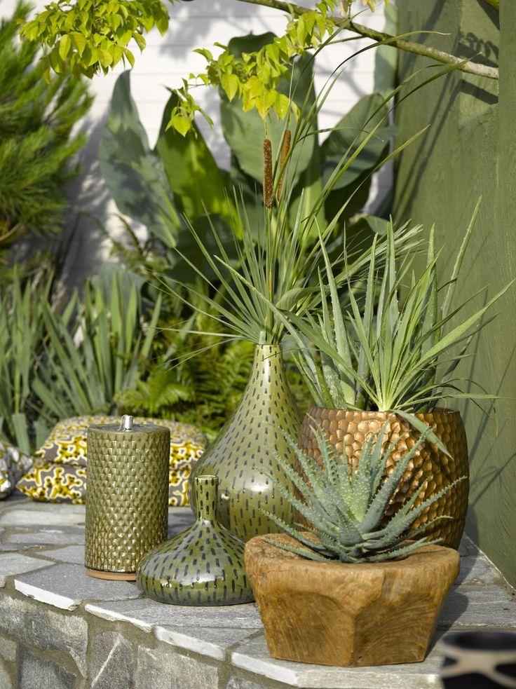 Die besten 25 kleine kaktuspflanzen ideen auf pinterest for Cactus in pots ideas