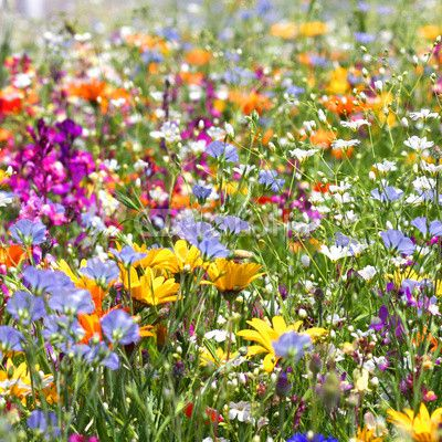 Summer flower field