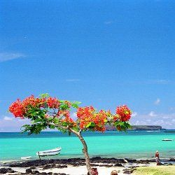 Lonely Planet - Top things to do in Mauritius