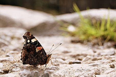 Beautiful butterfly by Adéla Kosová