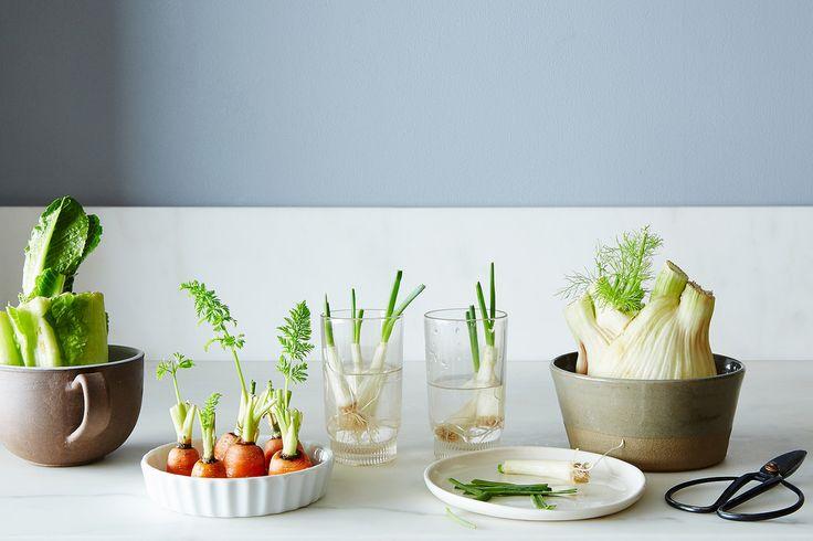 Zamiast wyrzucać resztki sałaty rzymskiej czy imbiru - włóżmy je do doniczki. Odrosną i będą nas cieszyć ekologicznym warzywnikiem!