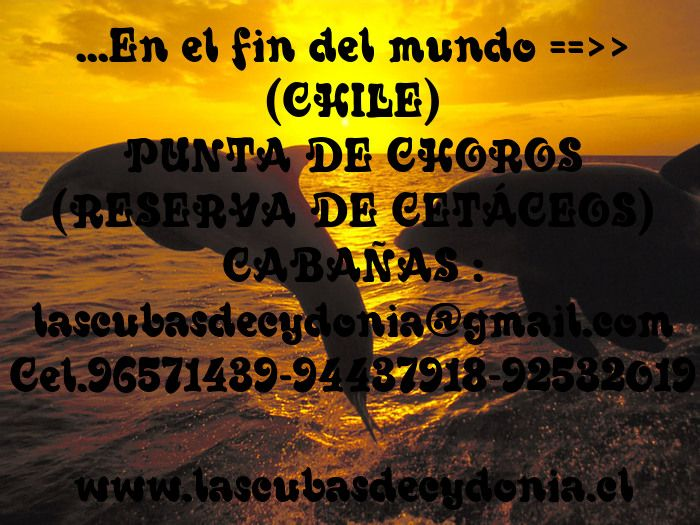 want to know northern chile then wait no more and visit www.lascubasdecydonia.cl I guarantee you peace of mind relax relax relax