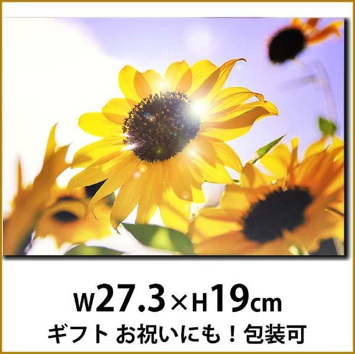 壁飾りインテリアパネル夏ひまわり写真花P3