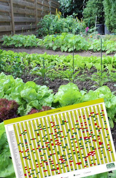 Design#5001573: 17 best ideas about gartentipps on pinterest | daumen, garten .... Garten Januar Was Ziergarten Tun