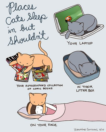 Places cats sleep