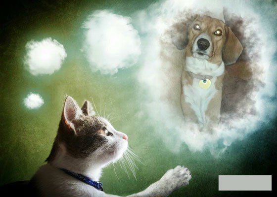Μια νέα έρευνα έρχεται να δώσει επιτέλους απάντηση στο ερώτημα : Ποιος είναι πιο έξυπνος; Η γάτα ή ο σκύλος; Διαβάστε την έρευνα και θα εκπλαγείτε...