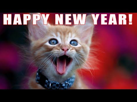 FUNNY CATS SING NEW YEARS - YouTube
