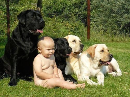 I think there's a pic of me like this with the 2 black labs I grew up with: Sam & Rip, a father & son team.