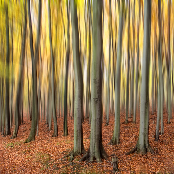 some kind of blur..#Repin By:Pinterest++ for iPad#: Natural Photography, Magic Forests, Ipad, Landscape, Popular Photos, Photography Inspiration