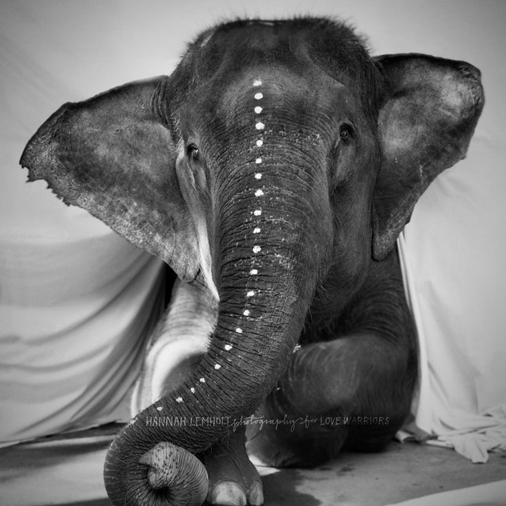 Adéle the elephant from the Lemholt N Bergman for Love Warriors 'Warriors around the World' project launching summer'14 | © Hannah Lemholt Photography / Love Warriors