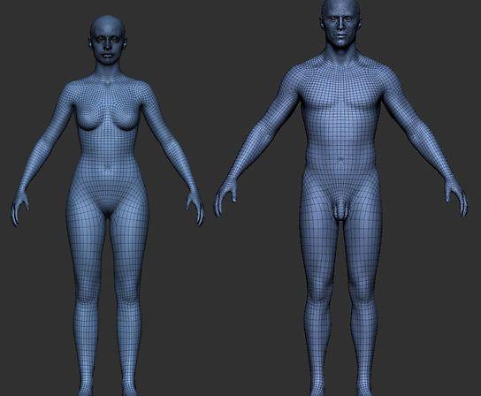 Pro Male/Female Basemesh   edge flow Ref   Figure drawing models