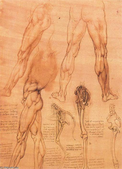 """""""Studi di gambe dell uomo e la gamba di un cavallo"""", gesso, inchiostro di Leonardo Da Vinci (1452-1519, Italy)"""