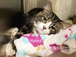 PODRICK IS ABOUT 2 YRS OLD AND NEEDS RESCUE!