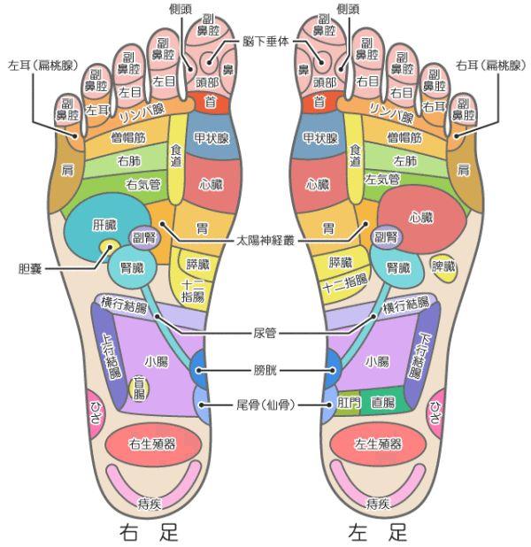 【体の不調を教えてくれる?】足裏のツボが、体のどこに対応しているのかわかる図   COROBUZZ